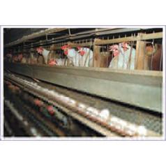 Автоматические дозирующие системы в птицеводстве